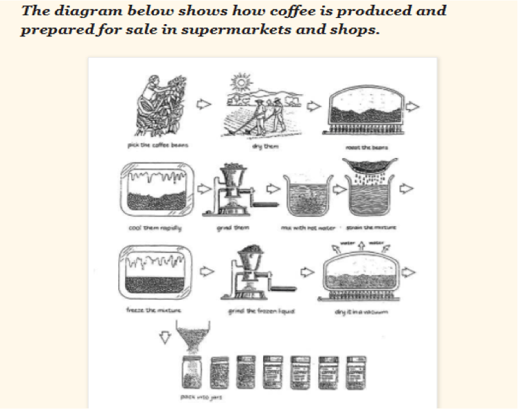 IELTS process question: How coffee is produced ad prepared for sale?